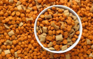 Aliments per a animals domèstics